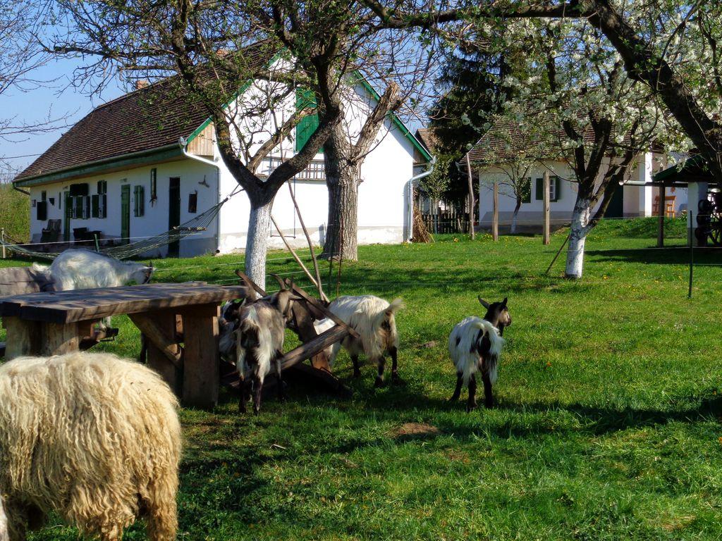 Rackák és kecskék